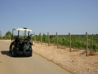 Golf and Wine
